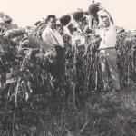 Mario Parasecolo e i girasoli